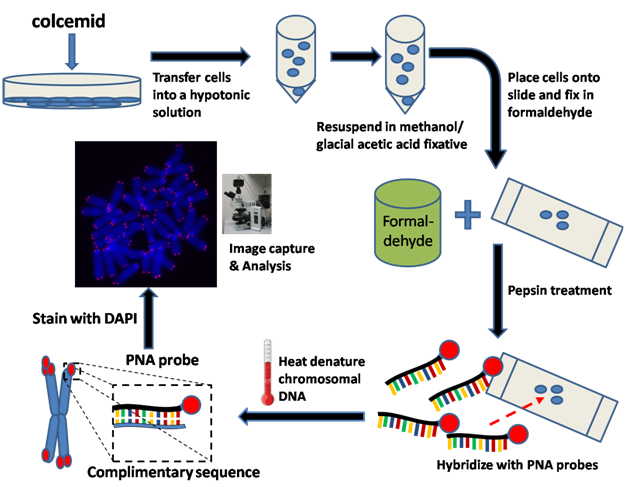 An overview of the benefits of fluorescence in situ hybridisation