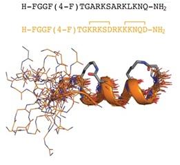 GPCR ligand nociceptin