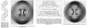 DNA Figure 1953
