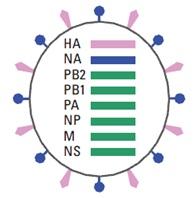 H7N9 genome 1