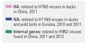 H7N9 genome 2