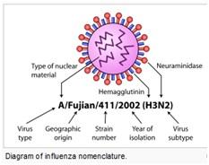 H7N9 Nomenclature