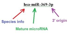 miRNA nomenclature a