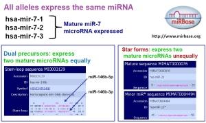 miRNA nomenclature