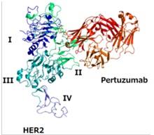 Pertuzumab