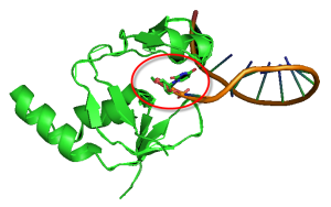PIWI PAZ Structure BP 1