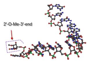 PIWI RNA structure 2