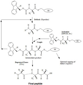 Peptide Syn 2