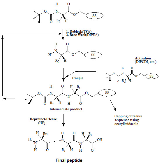 Which solid phase polypeptide synthesis do you like better? Fmoc ...