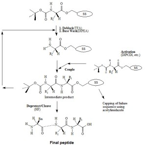 Peptide Syn 3