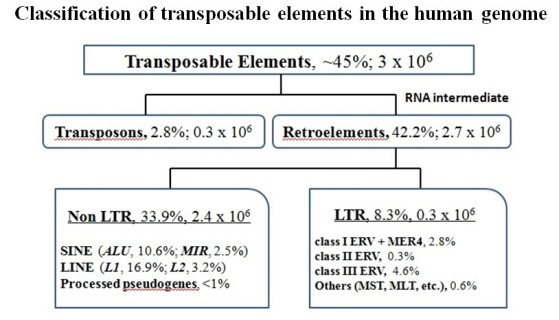 Trasnposable elements classification