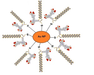 Au NP DNA Flare