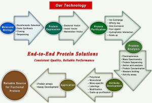 Protein Services BSI