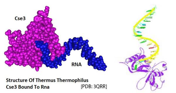 1 Cse5 RNA complex