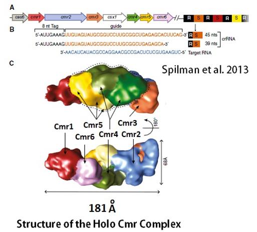 4 Holo Cmr Complex Model