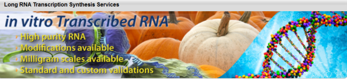 Long RNA Oligos IVT