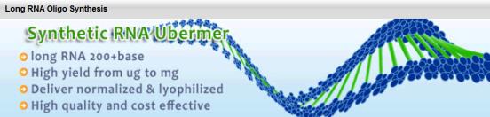 Long RNA Oligos